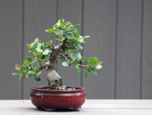 Best Artificial Trees for Indoors