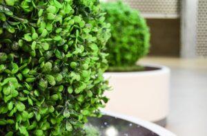 Best Artificial Outdoor Plants