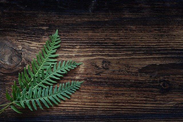 Best Indoor Ferns & Different Types and Varieties