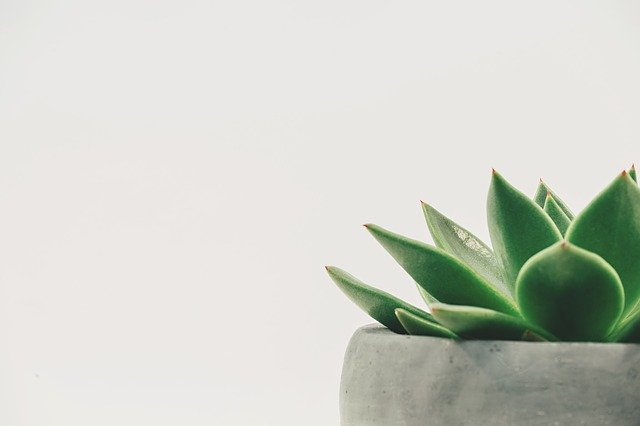 9 Best Succulents for Indoors