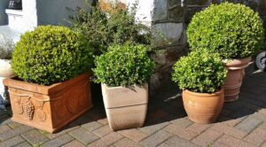 Best Artificial Boxwood Buxus