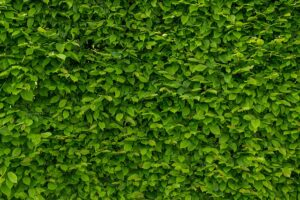 Best Artificial Hedge Roll
