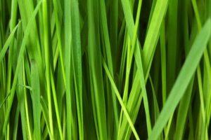 Best Artificial Grass Plants
