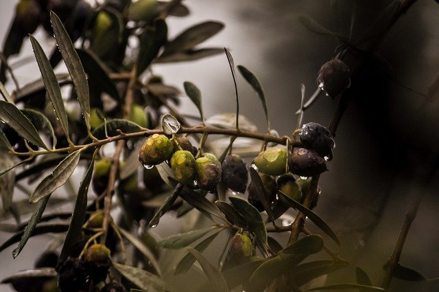 Best Artificial Olive Tree
