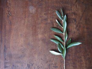 Best Artificial Olive Bushes