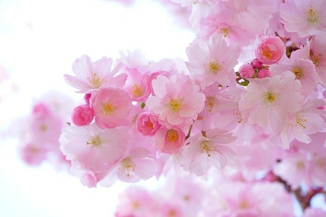 Best Artificial Cherry Blossom Trees