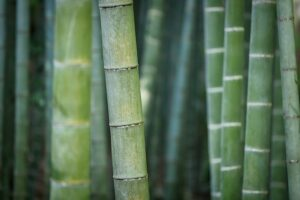 Best Artificial Bamboo Trees