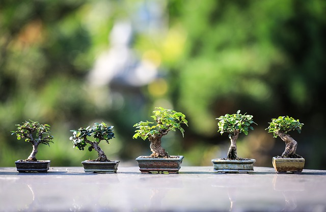 What are the Best Bonsai Trees for Beginners?