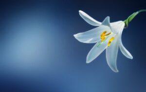 Best Artificial Lillies