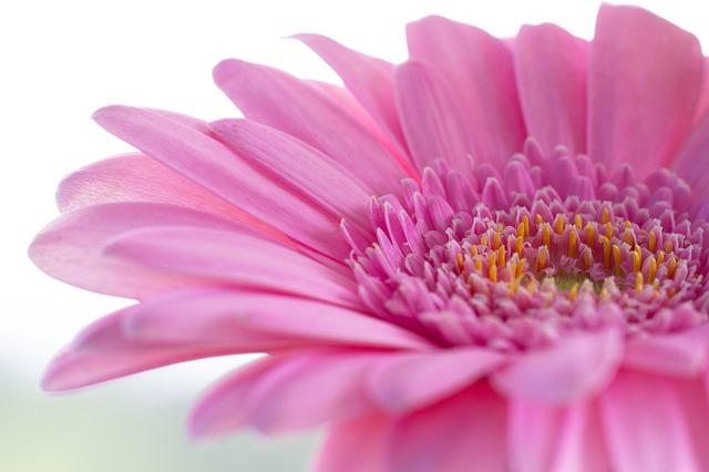 Best Artificial Gerbera Flowers