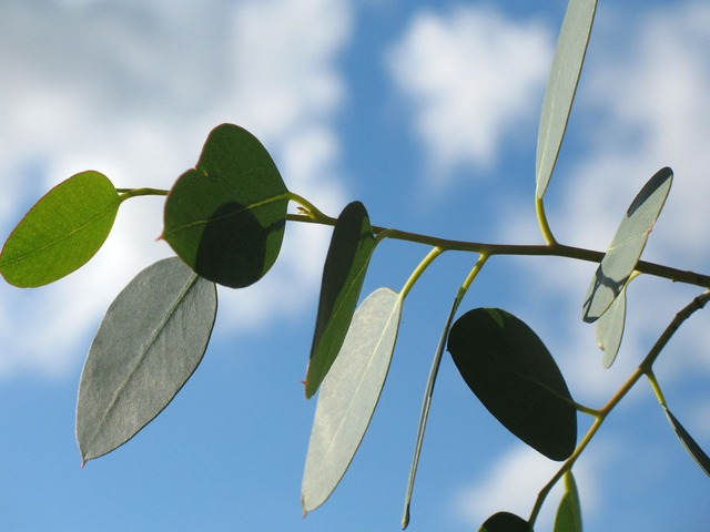 Best Artificial Eucalyptus