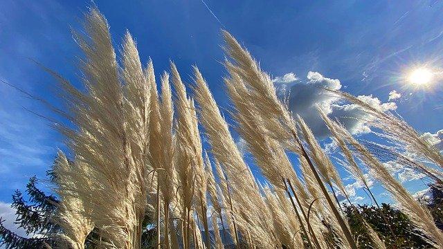 Best Artificial Pampas Grass