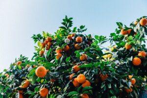 Best Artificial Orange Trees