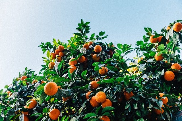 Best Artificial Orange Trees