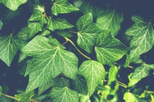 Best Artificial Ivy Plants & Garlands
