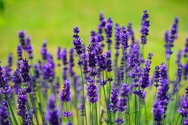 Best Artificial Lavender Plants For Outdoors